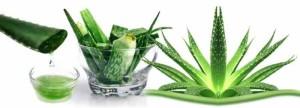 Aloe Vera pentru tratarea hemoroizilor